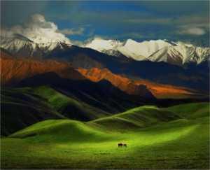APU Honor Mention e-certificate - Yi Wan (China)  Tianshan Grassland
