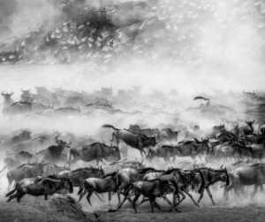 APAS Gold Medal - Baoli Gong (China)  Great Migration