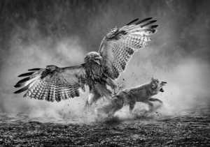 PhotoVivo Gold Medal - Arnaldo Paulo Che (Hong Kong)  Thrilling Attack 1