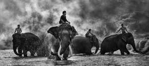 ICPE Gold Medal - Say Boon Foo (Malaysia)  Elephants Bath 2
