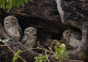 Circuit Merit Award e-certificate - Waranun Chutchawantipakorn (Thailand)  Three Owls