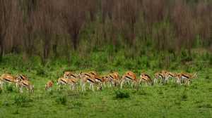 PhotoVivo Gold Medal - Meng Xue (China)  Large Herds