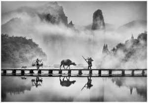 PhotoVivo Honor Mention e-certificate - Sally Leung (Hong Kong)  Dawn