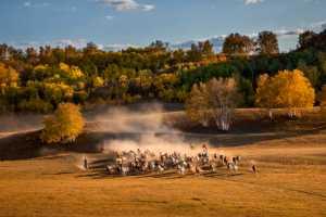 PhotoVivo Gold Medal - Liquan Sheng (China)  Herds