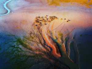 PhotoVivo Gold Medal - Ping Lu (China)  Wetland Home 5