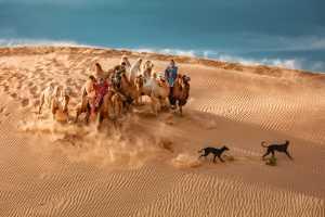 Circuit Merit Award e-certificate - Xiping An (China)  Camel Dog5