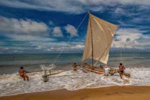 APU Spring Merit Award E-Certificate - Shehan Trek (Sri Lanka)  Dangerous Dives