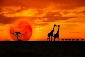 APU Spring Honor Mention E-Certificate - Shehan Trek (Sri Lanka)  Sceen At The Sunset