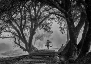 APAS Gold Medal - Sze-Wah Chee (Singapore)  Grandma Framed Tree
