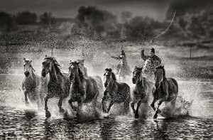 PhotoVivo Gold Medal - Wendy Wai Man Lam (Hong Kong)  Running Horses 9