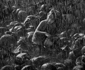 PhotoVivo Honor Mention e-certificate - Tan Ngo Van (Vietnam)  Under Rain