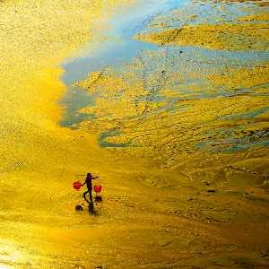 Circuit Merit Award e-certificate - Xinglei Gao (China)  Golden Beach