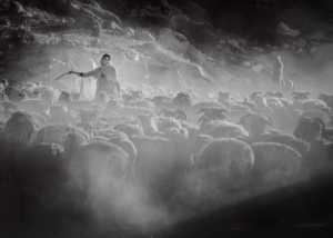 PhotoVivo Gold Medal - Xiangyang Gui (China)  Herds Song