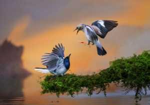 PhotoVivo Gold Medal - Yakang Ai (China)  Upon The Water