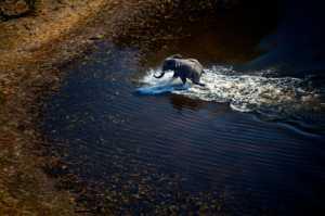 PhotoVivo Gold Medal - Xinxin Chen (China)  Elephant Cross The River4