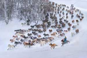 PSM Gold Medal - Yuk Fung Garius Hung (Hong Kong)  Snow Horses 3