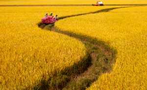 Circuit Merit Award e-certificate - Xuan Han Nguyen (Vietnam)  Rice Crop