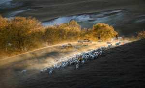 ICPE Honor Mention e-certificate - Yu Liu (China)  Herding Back