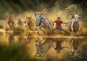 PhotoVivo Gold Medal - Arnaldo Paulo Che (Hong Kong)  Cow Racing Festival 1