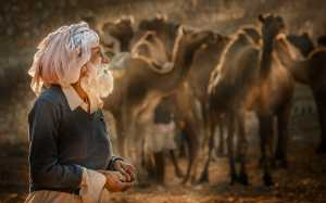 PhotoVivo Gold Medal - Xiu Liu (China)  Camel Herd