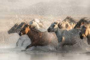 APU Gold Medal - Yiping Zhang (China)  Beautiful Horses