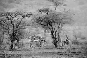 Circuit Merit Award e-certificate - Hailin Dai (China)  Zebra And Deer