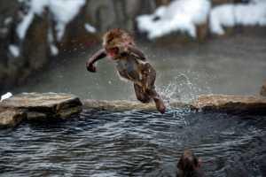PhotoVivo Gold Medal - Mingzai Su (China)  Jump