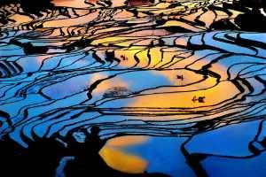 PhotoVivo Gold Medal - Tong Hu (China)  Idyllic Light