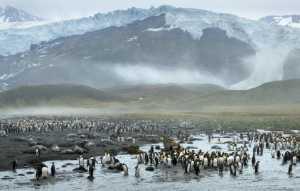 Circuit Merit E-cert - Yanru Shen (China)  Penguin World 2