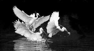 PhotoVivo Gold Medal - Shou Dou (China)  The Charm Of Hunting