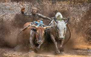 APAS Gold Medal - Tat Seng Ong (Malaysia)  Bullrace 1