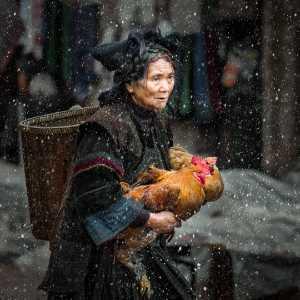 PhotoVivo Gold Medal - Honghui Zhu (China)  Sell Chickens