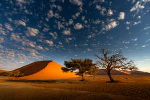 ICPE Honor Mention e-certificate - Hongbing Wang (China)  Life In The Desert