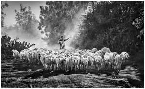 APU Winter Gold Medal - Yan Wong (China)  Shepherd And Sheep