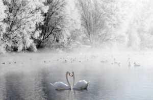 APU Honor Mention e-certificate - Xiaoling Li (China)  Winter Love