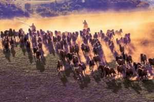 APAS Gold Medal - Shuzhou Zhang (China)  Horses