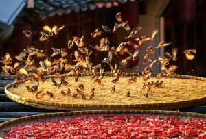 Circuit Merit Award e-certificate - Changyu Tong (China)  Autumn Harvest