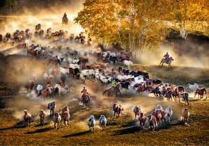 PhotoVivo Gold Medal - Wendy Wai Man Lam (Hong Kong)  Golden Horses 2