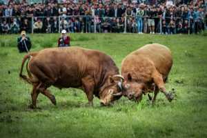 APAS Honor Mention e-certificate - Yi Huang (China)  Bullfighting