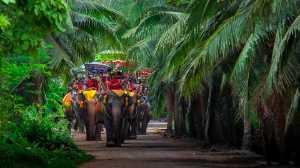 PSM Bronze Medal - Kosit Jitpiroj (Thailand)  Riding Elephant