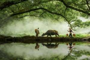 FIP Ribbon - Guoyue Huang (China)  Fairyland