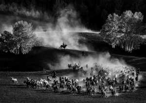 PhotoVivo Gold Medal - Hung Kam Yuen (Australia)  Song Of Horse Herding