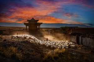 PhotoVivo Gold Medal - Guanghui Chen (China)  Return At Dusk In Ancient Town