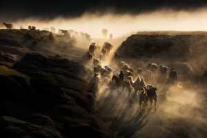 PhotoVivo Gold Medal - Peiwen Sun (China)  Move