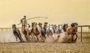 Circuit Merit Award e-certificate - Juanjuan Shen (China)  Horse Horse