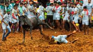 PhotoVivo Gold Medal - Udaya Thejaswi Urs (India)  Missed My Chance