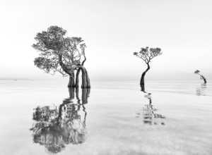 Circuit Merit Award e-certificate - Lili Yudiarta (Indonesia)  Tree On Beach 003