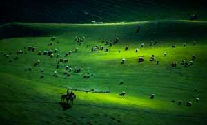 PhotoVivo Gold Medal - Huijun Liang (China)  Grassland
