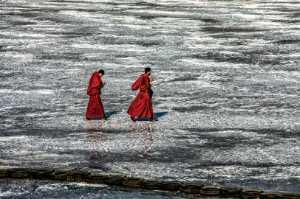 PhotoVivo Gold Medal - Shuzhou Zhang (China)  Walking