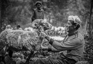 FIP Ribbon - Youlin Wu (China)  Shepherd